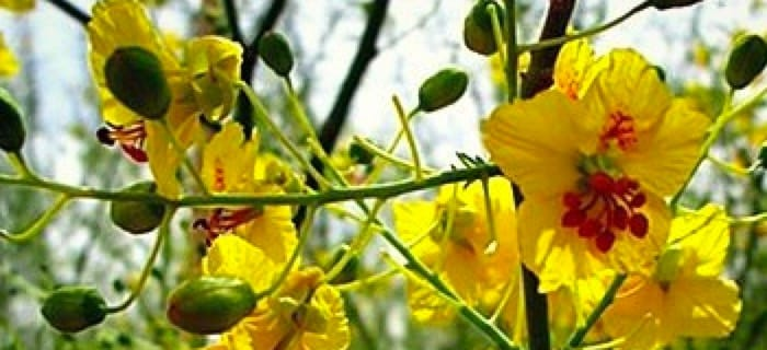 image-yellow-flowers